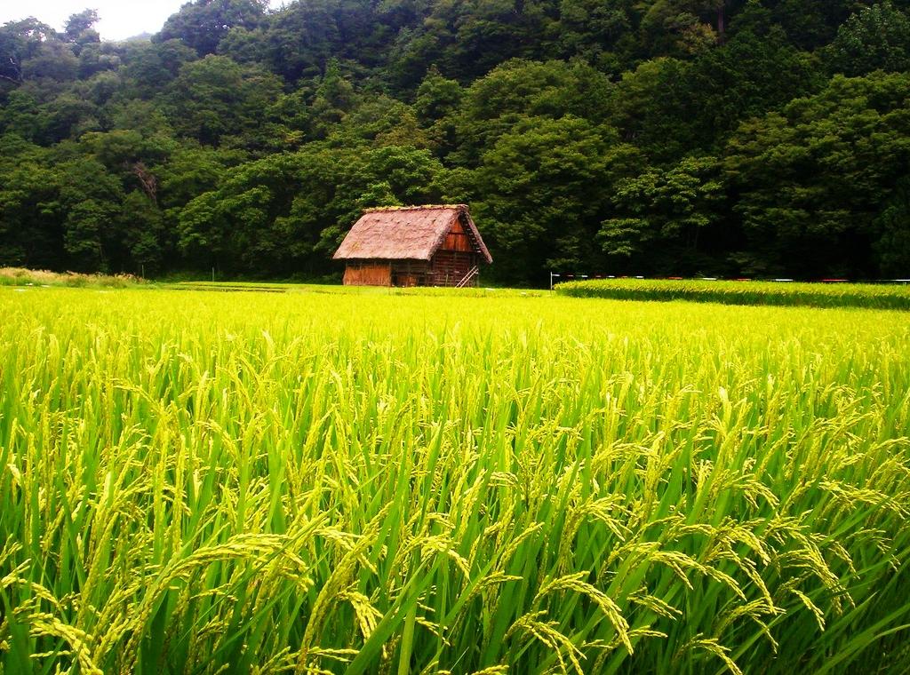 Niigata Nhật Bản có gì đặc biệt!